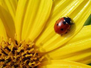 https://ilmiodiarioduo.files.wordpress.com/2011/12/coccinella.jpg?w=300